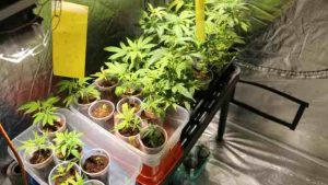 5 reasons to use grow tents