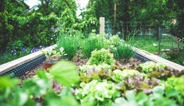 Garden Tips For 2021